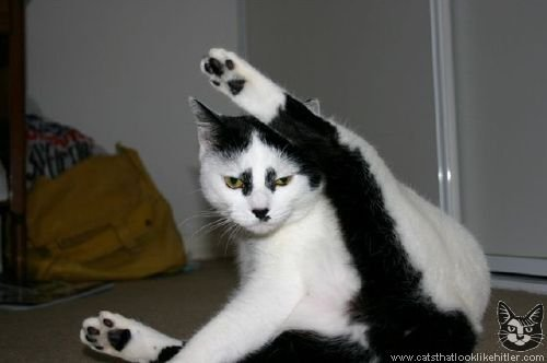 Figure 2: A cat that looks like Adolf Hitler