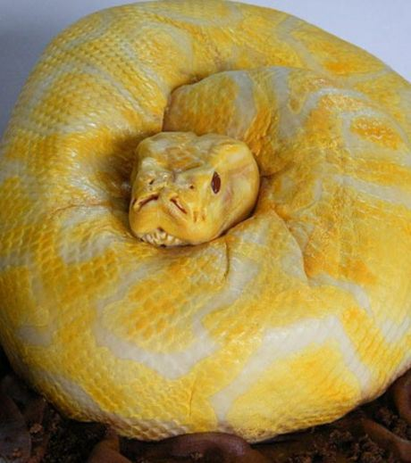 A Cake Made Like A Serpent