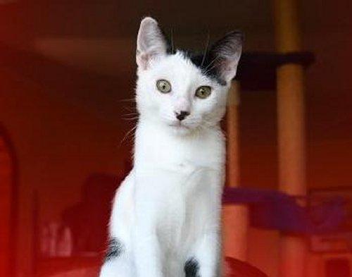 Figure 1: A cat that looks like Adolf Hitler