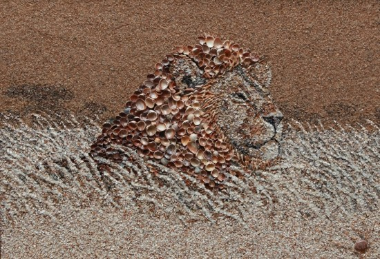 A Lion on the sand(Credit Svetlana Ivanchenko)