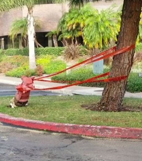 A Fire Hydrant Used to Keep A Tree From Falling