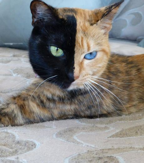 This cat really has a face with different colors