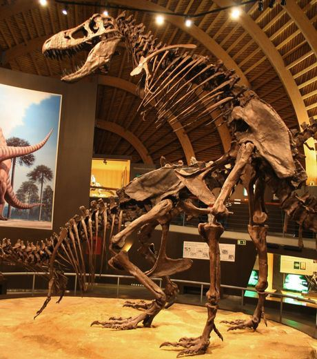 These Dinosaurs Skeletons Were Found In The Same Way