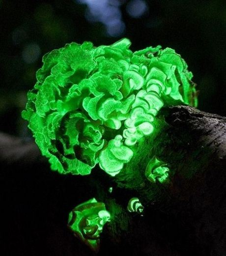 Glowing Ghost Mushrooms