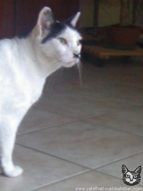 Figure 5: A cat that looks like Adolf Hitler
