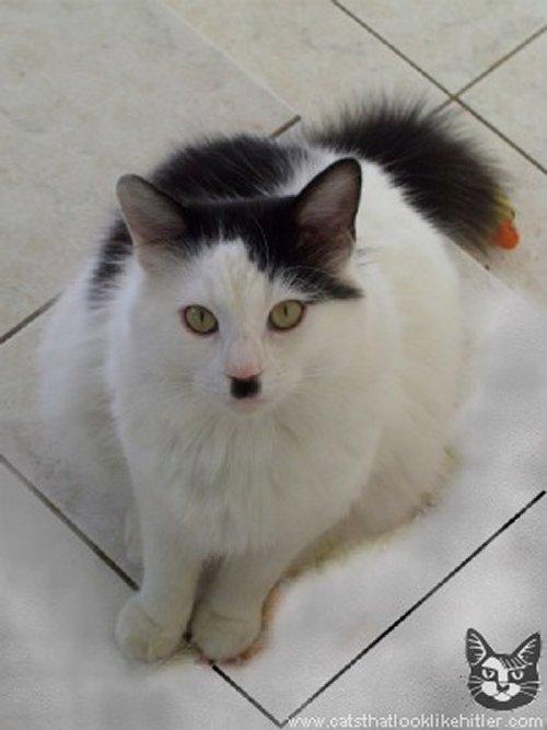 Figure 7: A cat that looks like Adolf Hitler