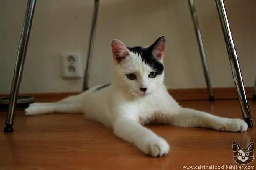 Figure 8: A cat that looks like Adolf Hitler