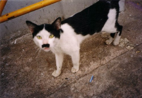 Figure 4: A cat that looks like Adolf Hitler
