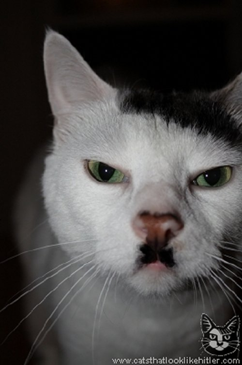Figure 10: A cat that looks like Adolf Hitler