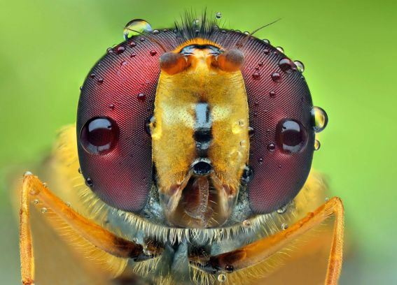 Figure 11: An Insect With Beautiful Eyes