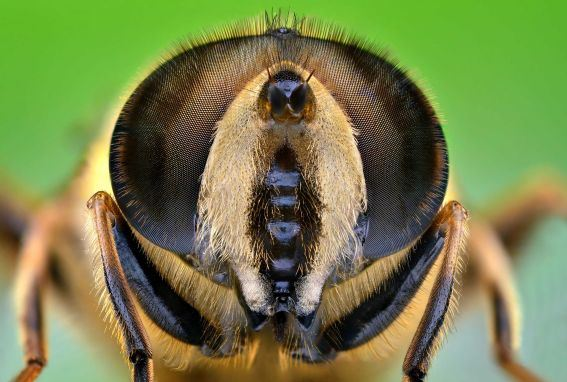 Figure 12: An Insect With Beautiful Eyes