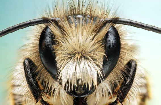Figure 10: An Insect With Beautiful Eyes