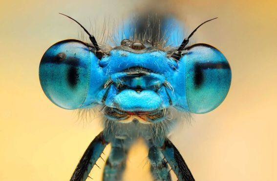 Figure 9: An Insect With Beautiful Eyes
