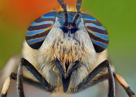 Figure 8: An Insect With Beautiful Eyes