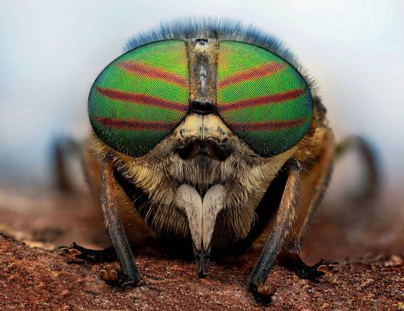 Figure 6: An Insect With Beautiful Eyes