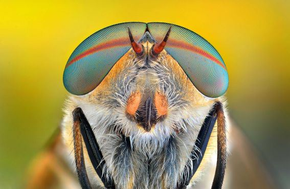 Figure 5: An Insect With Beautiful Eyes