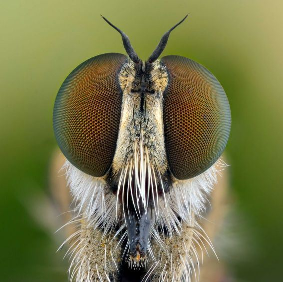 Figure 4: An Insect With Beautiful Eyes