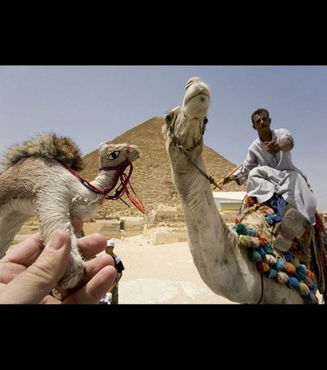 When a camel meets another camel (Credit Michael Hughes)