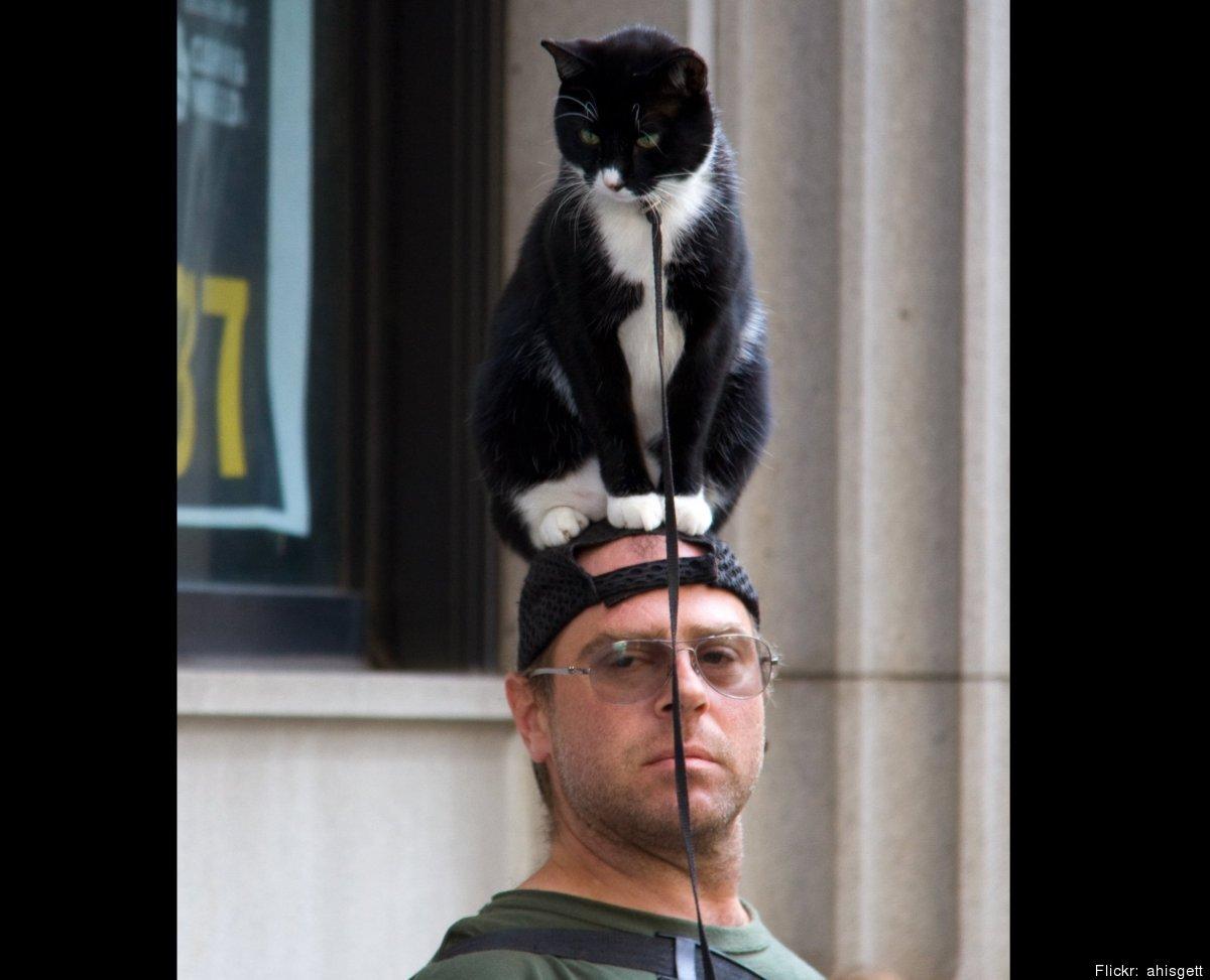Funny Cat Hats