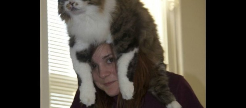 Cats As Funny Hats
