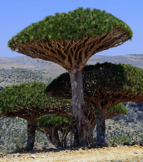 Socotra islands scenery in Yemen