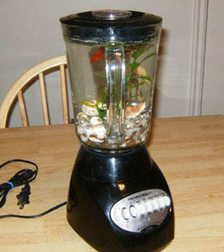 An Acquarium Made From  A Grinder
