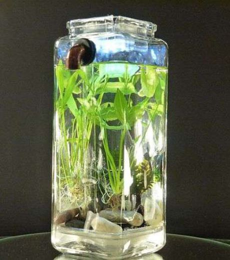 An Aquarium In An old Jar