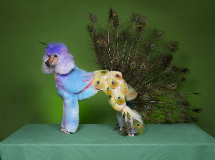 Dog Dressed As A Peacock