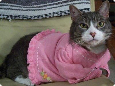 The Top Cat Sweater Designs