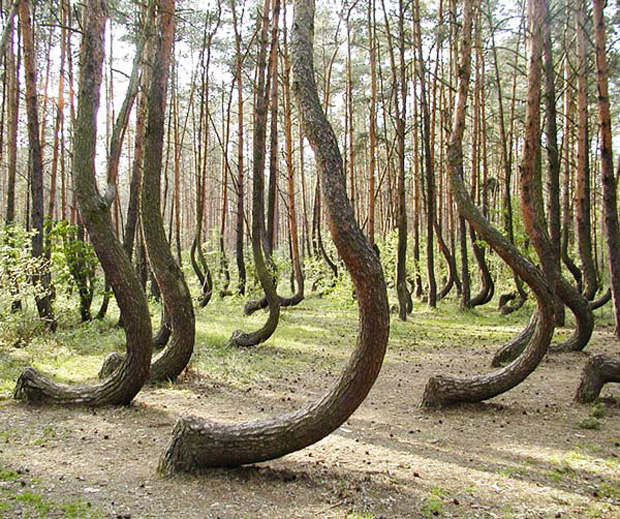 Crooked Forest in Poland.