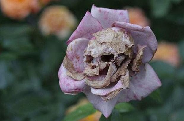 The Flower Skull
