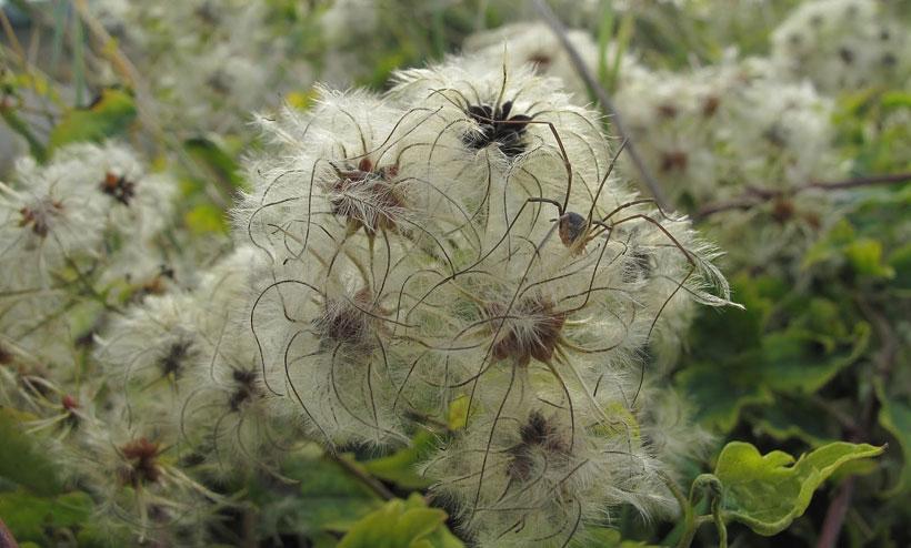 Spider Camouflage