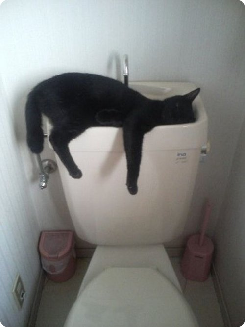 Cat lying over a flush