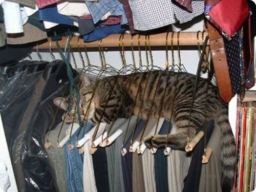 Cat  lying on a number of hangers