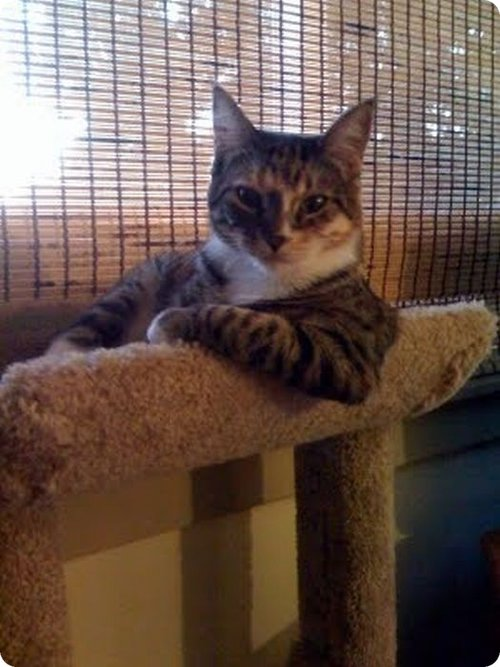 Cat  in a sitting posture
