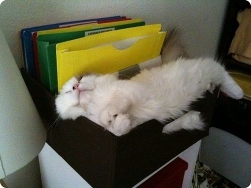 Cat sleeping in a file holder