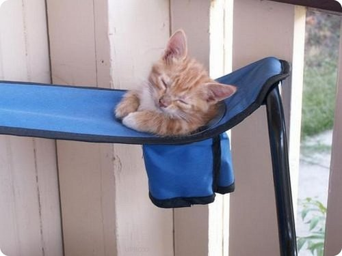 Cat  sleeping on a stool