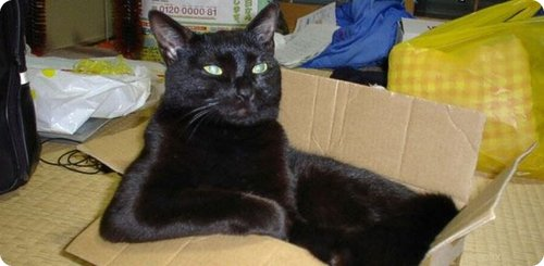 Black Cat sitting in a box