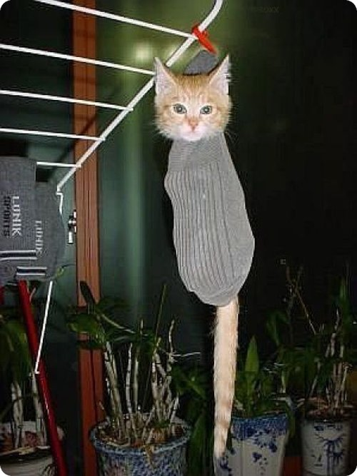 Cat inside sock hanged