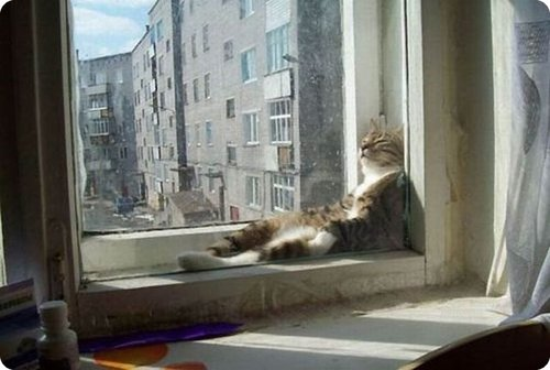cat_relaxing _2