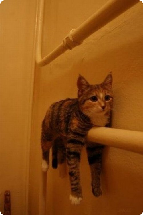 cat hanging through poles