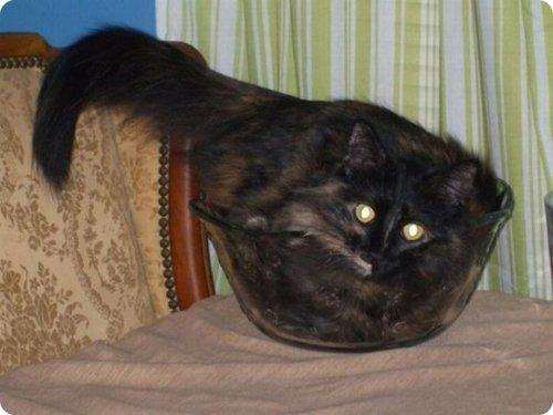 Cat inside a bowl