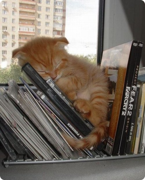 Cat sleeping in a cds stand