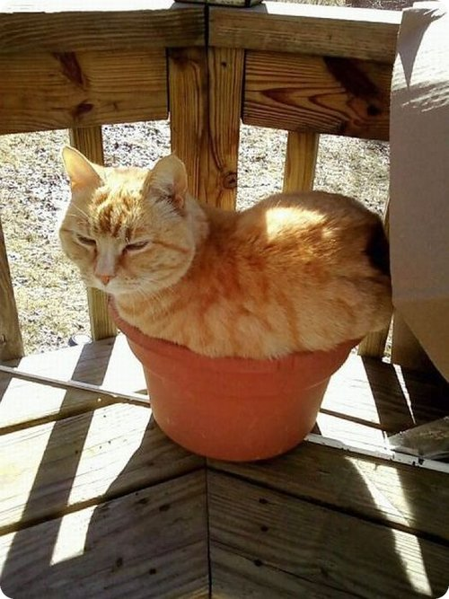 cat sitting inside a pot