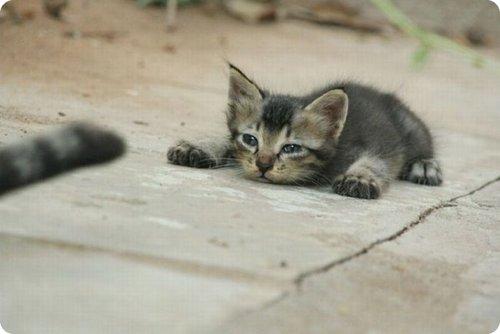 Cat lying over the floor