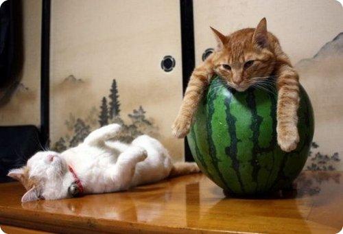 cat_relaxing _3
