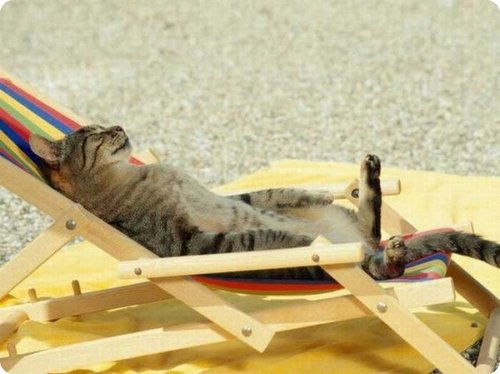 cat_relaxing _5