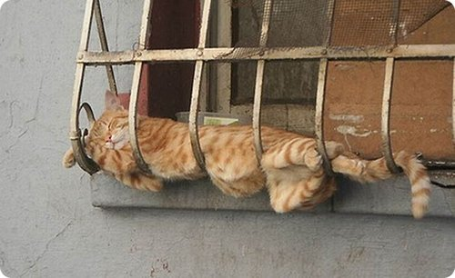 Cat lying over an iron grill