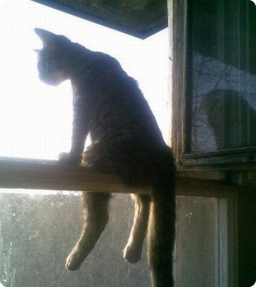 Cat sitting in a window