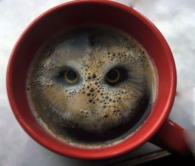 Optical illusion of owl eyes in coffee